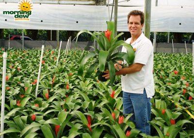 Bromeliads: Aechmea Starlite