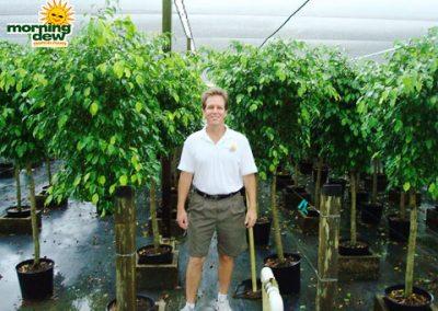 Ficus: Benjamina Std.