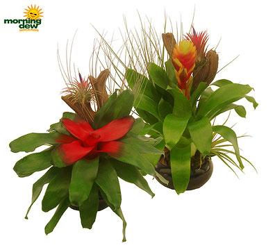Bromeliads: Dish Garden (Medium)