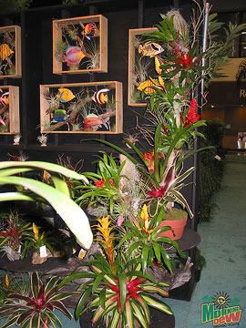 Bromeliads: Driftwood Gardens