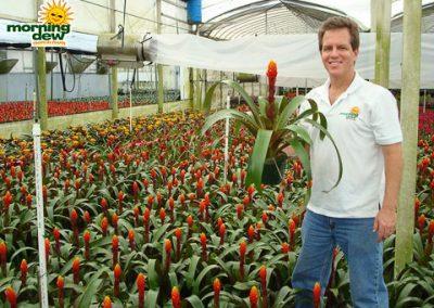 Bromeliads: Guzmania Ada