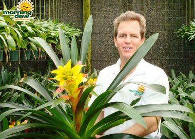 Bromeliads: Guzmania Amimosa
