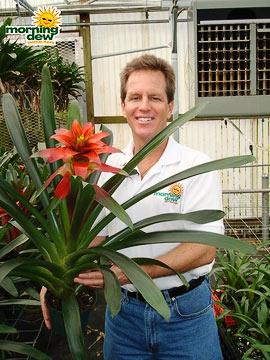 Bromeliads: Guzmania Laura