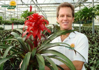 Bromeliads: Guzmania Myth