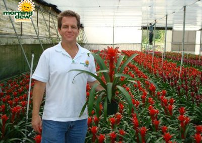 Bromeliads: Guzmania Ostara