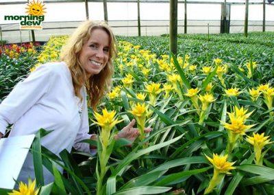 Bromeliads: Guzmania Puna Gold