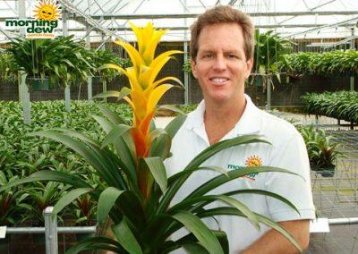 Bromeliads: Guzmania Saffron