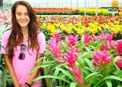 Bromeliads: Guzmania Voila