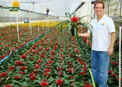 Bromeliads: Guzmania Wendy