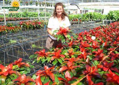 Bromeliads: Neoregelia Deb