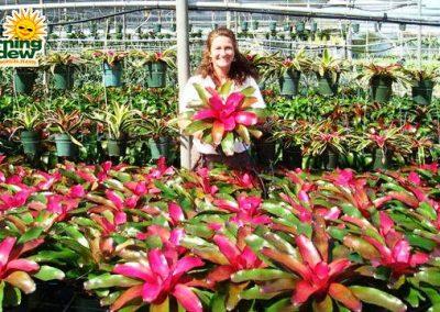 Bromeliads: Neoregelia Lila