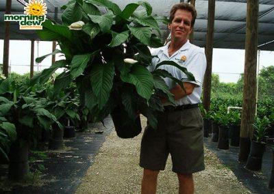 Spathiphyllum: Sweet Pablo