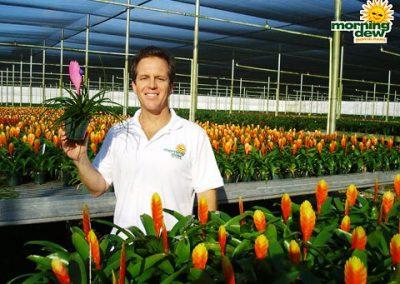 Bromeliads: Tillandsia Cyanea